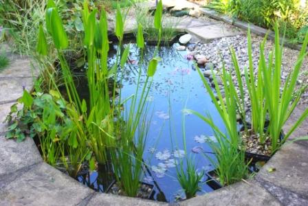 Pond season help ornamental aquatic trade association for Ornamental fish pond maintenance