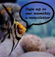 newsletter signup pic